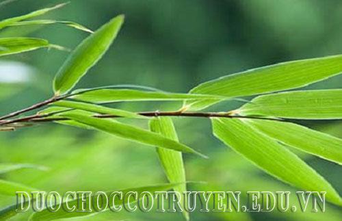 Dược học cổ truyền bài thuốc thanh nhiệt hạ sốt từ lá tre
