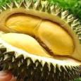 Món ăn bài thuốc bổ thận tráng dương từ sầu riêng
