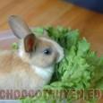 Món ăn chữa bệnh suy nhược từ thỏ