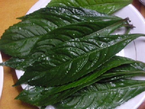 Bài thuốc dân gian chữa viêm họng từ lá xương sông