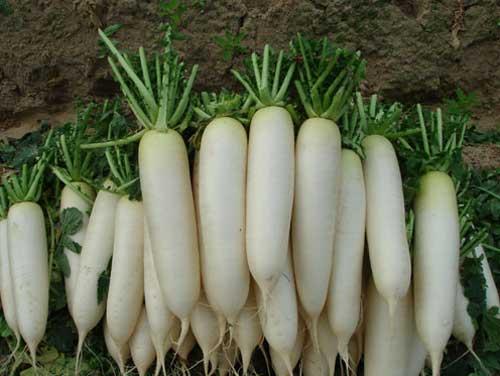 Giảm huyết áp nhờ củ cải trắng