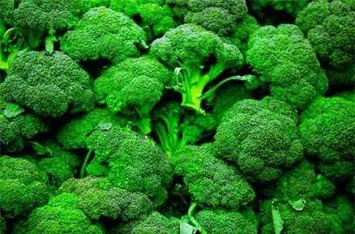 Súp lơ xanh giúp cho hệ tiêu hóa luôn khỏe mạnh