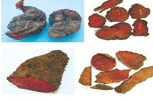 Cây hà thủ ô đỏ giúp giải độc hiệu quả