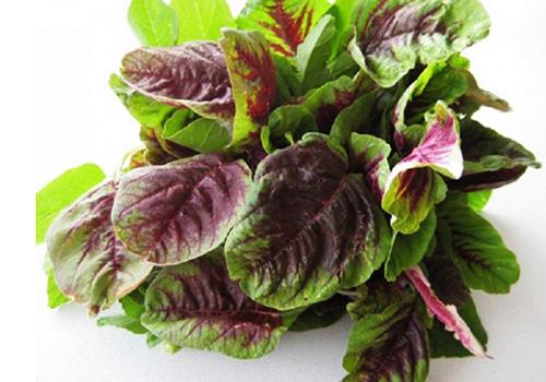Bài thuốc đông y từ cây rau dền