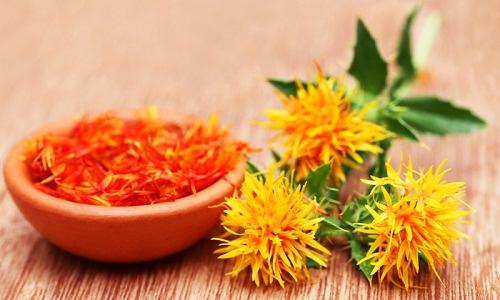 Những bài thuốc hay từ cây hoa cúc vạn thọ