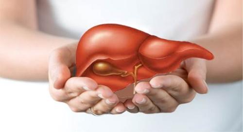 YHCT bật mí cho mọi người những thực phẩm giải độc gan