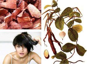 Bài thuốc trong Y học cổ truyền trị chứng rụng tóc