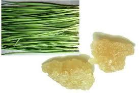 Phương pháp điều trị ho bằng lá hẹ chưng đường phèn trong bài thuốc YHCT