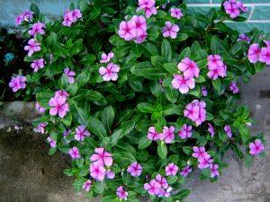 Hướng dẫn điều trị bệnh huyết áp bằng cao bằng hoa