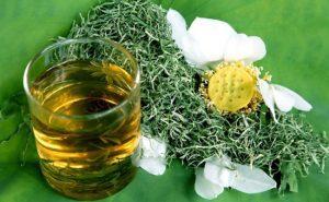 Một số bài thuốc dân gian chữa bệnh từ lá sen mà các bạn có thể tham khảo