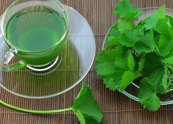 Một số bài thuốc từ rau má có thể chữa được nhiều chứng bệnh