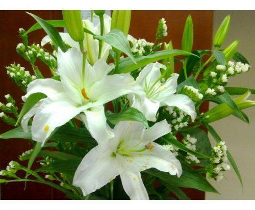 Hoa bách hợp là một loại cây thảo thường mọc hoang